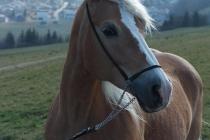 Niretta (1)