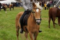 Pferdeherbst Mils 2017 (5)